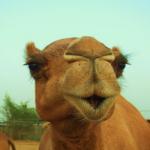 leche-de-camello.png